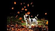 Песен за мир на Деня на Световната животни
