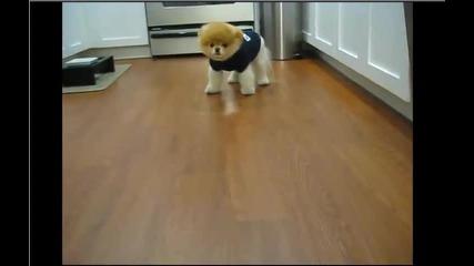 Сладко куче като мече