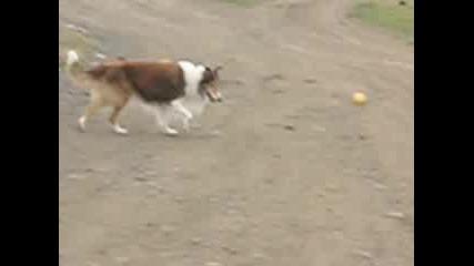 Кучето Стивчо - Мързел