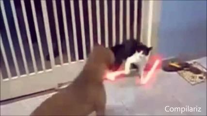 Смешни и забавни котки