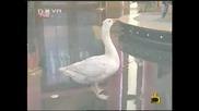 Катето Евро:Защо се изкенза мамицата ти мръсна-Господари на ефира 23.04.2008 HQ