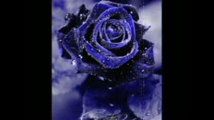 Sonata Arctica - No Dream Can Heal a Broken Heart lyrics