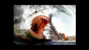 Megalodon - The Monster Of Sharks