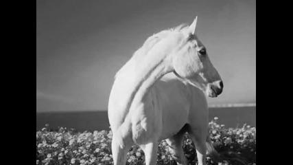 Аквариум альбом Лошадь Белая