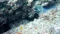 Едно от най-странните морски същества !