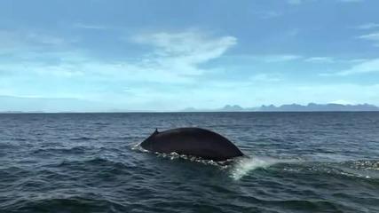 Планетата Земя - синият кит Bbc hd*