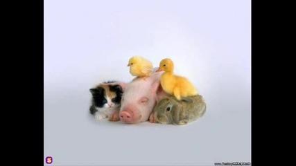 Малки Животинки!!!.wmv