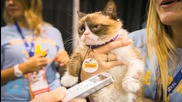 Meet the Artist Who Made a Grumpy Cat Bust Out of Bacon