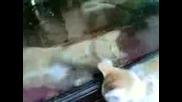 Това Е Малкото На Котката