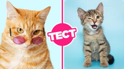 ТЕСТ: Само истинските фенове на котките могат да се справят с този тест!