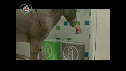 Разделяй отпадъците си ! Дори и магарето ЛоЛо го прави защо да не го правиш и ти ?