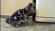 Забавни закачки между котета