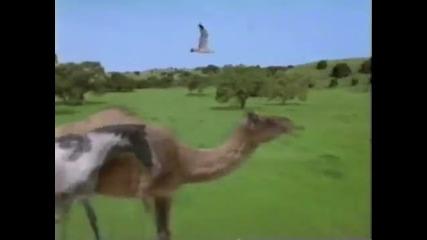 Hollywood Safari Tv series intro