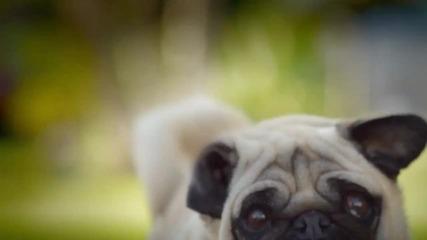 Не се заяждай с кучето - Смях