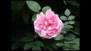 In mirosul florilor ! ~ceyhun - Ata Gozel ifa -