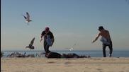 Луда шега на плажа с птици!