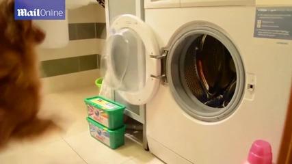 Куче помага за прането