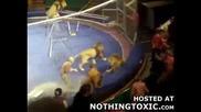 Лъв атакува човек по време на шоу