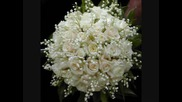 Бяла роза remix