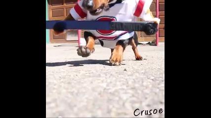 Кучето Крузо играе хокей