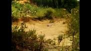 Minuscule - The Ants