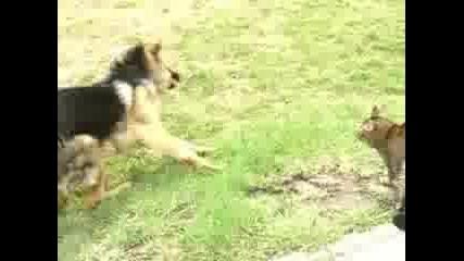 Котки срещу кучета !много смях!
