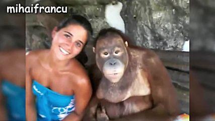 Компилация сладки и забавни маймуни