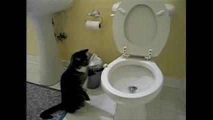 Образцови Котки