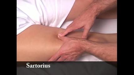 Клиничен масаж 9 от 10