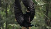 Райските птици!