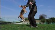 Сладко кученце скача на въже