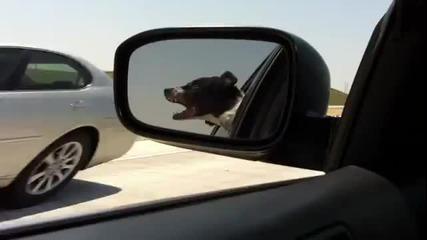 Смях ! Куче иска да ухапе минаващите коли