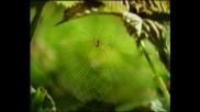 Minuscule - Базик С Мухите:)