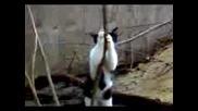 Смях!!!котка прави стрийптийз!!!!