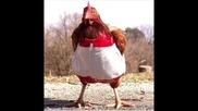 2012 Кокошка кючек Яко!!кокошката Е Най Големия Хищник На Земята :d