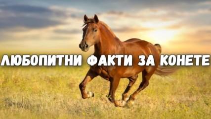 Любопитни факти за конете