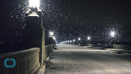 Bridge Closed Over Swarms of Mayflies