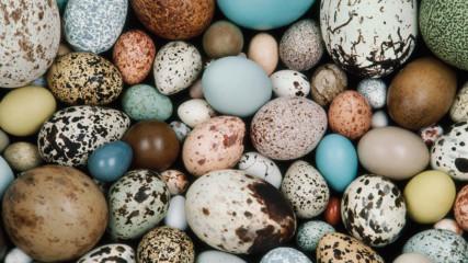 Най-изумителните птичи яйца!
