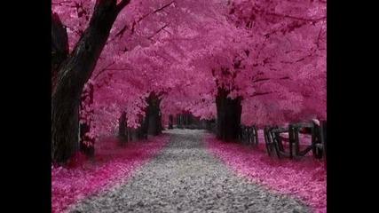 Amazing Trees - Amazing Grace - Andre Rieu