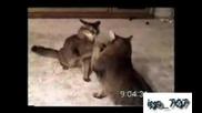 Най - Шантавите Котки Във Vbox7