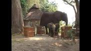 Забавно Слонче