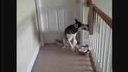 Куче се сдухва от котка !