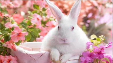 Зайчето и сладоледа - детска песничка