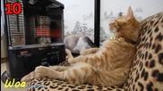 Компилация - 101 Котки! Смях!