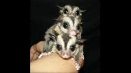 Малки Сладки Животинки