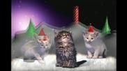 Котенца изпълняват свята нощ
