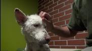 Трогателно ! Спасяване на бездомно куче !