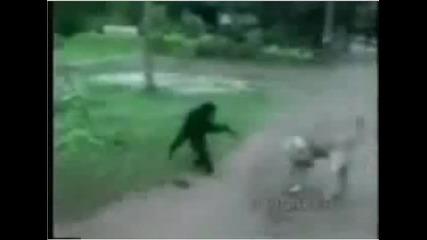 Маймунка ебава куче