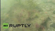 Russia: Ancient pottery discovered off Crimean coast