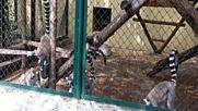 Снимки В Зоологическата Градина